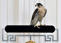 These Dubai hotel suites have room for your falcons