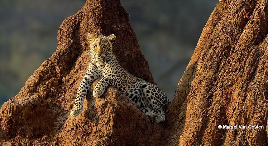 Wild Photography, Grame Green, Photos, Wild Animals, Africa, Adventure