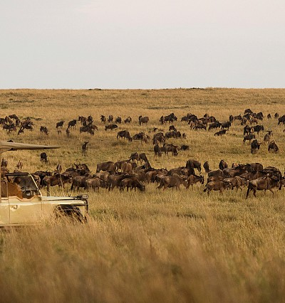 TRAVEL INTEL: Hooves and homebrew in the northern Serengeti