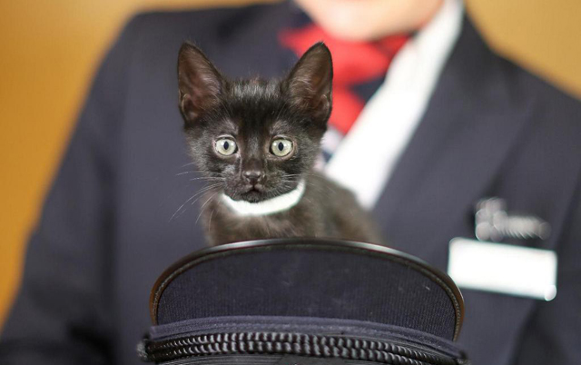 Paws and Relax with kittens on BA's in-flight entertainment system